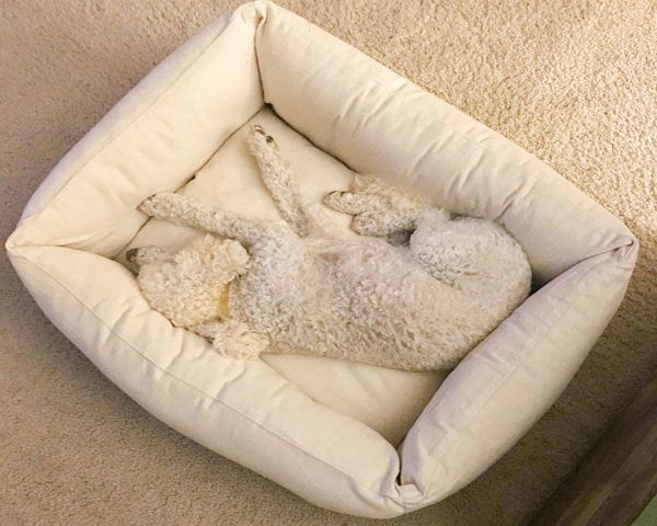 100% Natural wool-filled pet bed with boards